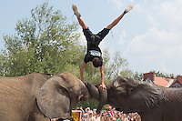 Rene Caselly Jr. of Germany stands with his hands on the heads of two circus elephants of the Caselly Family on a beach of lake Balaton in promotion of the Circus Night event at Balatonlelle (about 140 km South-West of capital city Budapest), Hungary on July 18, 2015. ATTILA VOLGYI