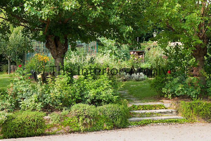 Steps leading into the garden where herbs and vegetables are grown shaded by fuirt trees