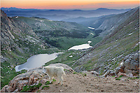 I had gone to Mount Evans to photograph the sunrise over the Rocky Mountains. I was amused to have a curious mountain goat come by to see what I was doing. He seemed ok to be a part of this Colorado image, so I gladly accepted his presence.