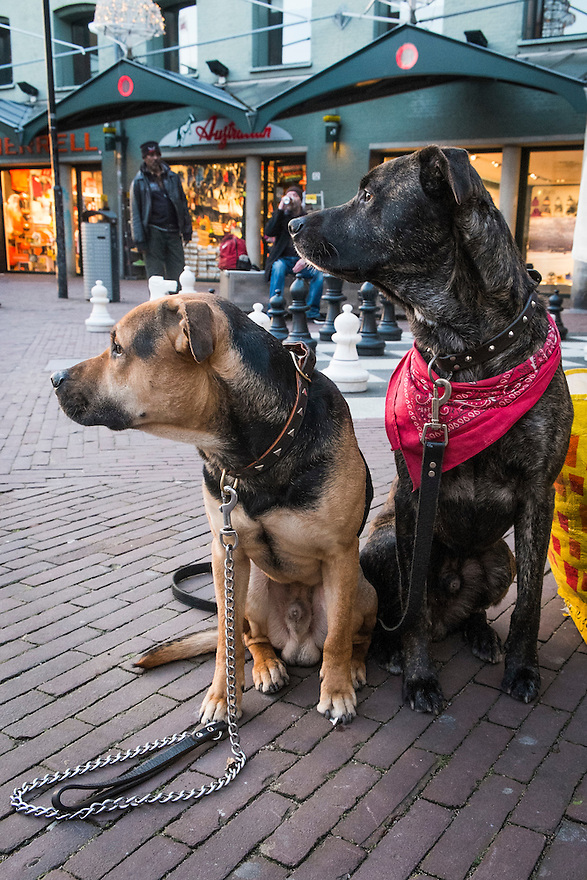 Nederland, Amsterdam, 3 febr 2014<br /> Twee honden zitten braaf op het trottoir.<br /> Foto: Michiel Wijnbergh