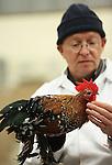 Foto: VidiPhoto<br /> <br /> BARNEVELD - De mooiste, beste en duurste kippen van Nederland worden vrijdag en zaterdag gekeurd in -hoe kan het ook anders- Barneveld. De bekende kleindiertentoonstelling Gallinova staat, zoals gebruikelijk in het Veluwse kippendorp, in het teken van kippenrassen uit de hele wereld. Dit jaar krijgen de keurmeesters hulp van studenten van het agrarische Groenhorstcollege in Barneveld. Het aantal kippenfokkers in Nederland neemt echter drastisch af, volgens voorzitter Jan Vogel van Gallinova. Oorzaak is de toenemende kippen- en hanen intolerantie van de buurt, die steeds vaker bij de politie klaagt over kraaiende hanen en ontsnapte kippen. De kippenkeuring van vrijdag wordt gevolgd door een open dag voor het publiek zaterdag.