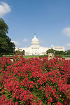 Washington DC; USA:  The Capitol Building, legislative center of the US government, with red flowers.Photo copyright Lee Foster Photo # 3-washdc83147