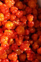 Cloudberries (Rubus chamaemorus)grows in in bogs, and marshes in the mountains of the Nordic countries. They are rich in vitamin C, and requires sunny exposures in acidic ground.