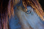 Exteme close-up of horses profile, Bahia, Brazil