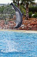 Dolphins jumping in an aquarium