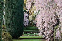 Axial view across Filoli Wall Garden to The Wedding Place with spring flowering cherry trees