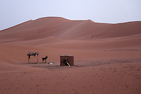 A lone donkey is dwarfed by the massive dunes of the Erg Chegaga in the Sahara desert in Morocco.