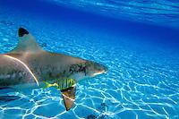 French Polynesia-Bora Bora-Swimming with rays and reef sharks & motu picnic