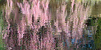 Weeping Cherry Blossom Reflection, Brooklyn, 16x32 archival gicle&eacute; canvas edition of 25:  $700