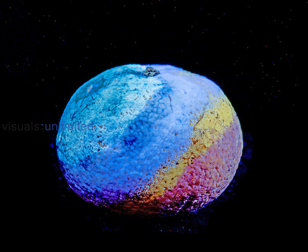 Satsuma fruit with mold (Penicillium) fluorescing in ultraviolet light (UV). Compare with 3099434. Series