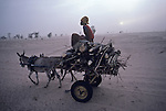 Hauling firewood, a vendor heads for market in Senegal. Nine of ten rural Sahelians use wood for fuel. The search is a consuming one; a woman may spend half her day scavenging twigs. As trees vanish, dung, used to fertilize crops, is burned, further impoverishing the soil. Due to over cutting, the region has lost more than half its forest since 1950. <br />