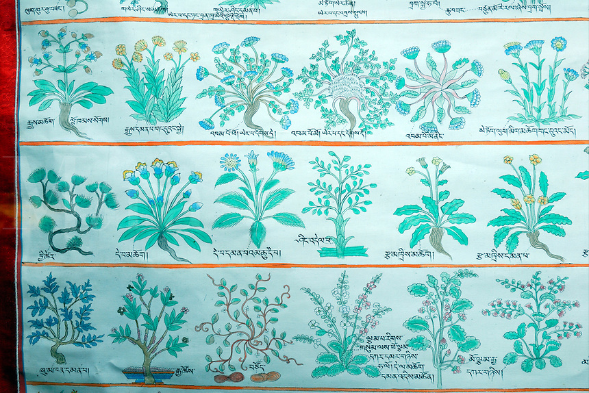 Detail of old Buddhist medical thangka, or instructional religious painting, of plants and herbs used in treatment of disease, Tibet Museum, Lhasa, China.