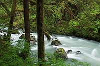 The Boulder River running through old-growth forest, Boulder River Wilderness, Mount Baker-Snoqualmie National Forest, Washington, USA
