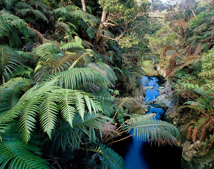 Rainforest stream in Kawela Gulch, Molokai Kamakou Preserve, The Nature Conservancy, HAWAII