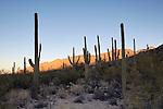 Sunrise on the Santa Catalina Mountains, Sabino Canyon Recreation Area, Coronado National Forest, Arizona
