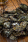 Fresh oysters at Drakes Bay Family Farms near Pt. Reyes, Calif., July 2, 2011.
