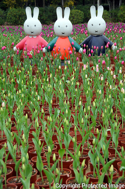 3 bunny statues stand at the end of a plot containing thousands of potted tulips ready for the Spring Festival in Guilin, China