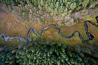 The Brda River runs through a forest near Tuchola with trees changing colour in Autumn.