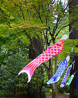 &quot;Koinobori&quot;, carp windsocks, carp streamers or carp banners, decorate the landscape of Japan from April through early May, in honor of Children's Day (originally Boys' festival) on May 5.<br /> In Japanese culture, the carp symbolizes courage and strength because of its ability to swim up a waterfall. These Koinobori are blowing in the wind at the Portland Japanese Garden.