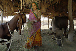 Khanji Daryani feeds her animals in Mirpurkhas, Sindh. She now lives on land and in a house her family built with help from Lower Sindh River Development Association (supported by Church World Service). She and her family are living free of a landlord?s control for the first time.
