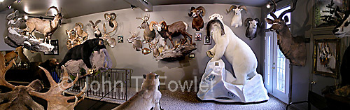 Trophy room collection of big game heads john fowler for Big game room