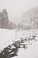 Shoshone National Forest Wyoming. Stream in winter