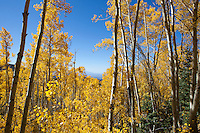 Fall colors at Aspen Vista Trail in Santa Fe, NM