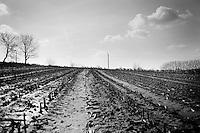 peloton along the way<br /> <br /> Kuurne-Brussel-Kuurne 2014