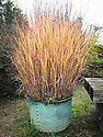 Ornamental grass in copper container, Marchants Hardy Plants, East Sussex, late October.