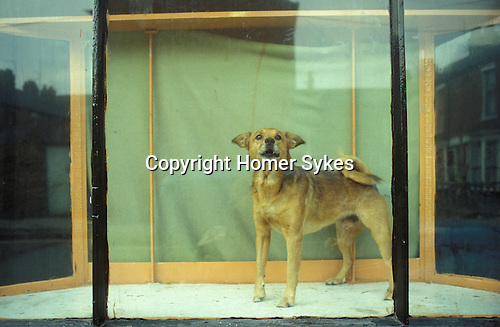 Dog in window Hull Humberside