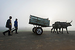 Ox cart with mag-wheels in the mist and accompanying herders, Maputo Province, Limpopo Floodplain, Mozambique