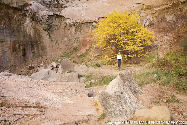 During a fall excursion, a hiker stands beneath a golden colored single leaf ash in a box canyon near the resort of Ghost Ranch in northern New Mexico.