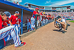 9 March 2013: Associated Press Photographer Evan Vucci lines up for a shot prior to a Spring Training game between the Washington Nationals  and the Miami Marlins at Space Coast Stadium in Viera, Florida. The Nationals edged out the Marlins 8-7 in Grapefruit League play. Mandatory Credit: Ed Wolfstein Photo *** RAW (NEF) Image File Available ***