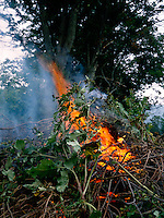 BRUSH FIRE<br /> Burning Wood (W.Corinth, VT)  Flame, a glowing body of mixed  gases, is the result of  the process of combustion, a chemical combination of the fuel substance with oxygen to produce carbon dioxide, carbon monoxide, and water.
