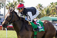 HALLANDALE BEACH, FL - APRIL 01:  #5 Celestine with Jose Ortiz up wins the Honey Fox (G2T) on Florida Derby Day at Gulfstream Park, Hallandale Beach, FL. (Photo by Arron Haggart/Eclipse Sportswire/Getty Images)