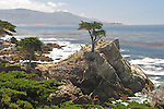 Lone Cypress, View  From 17- Mile Drive, California, USA