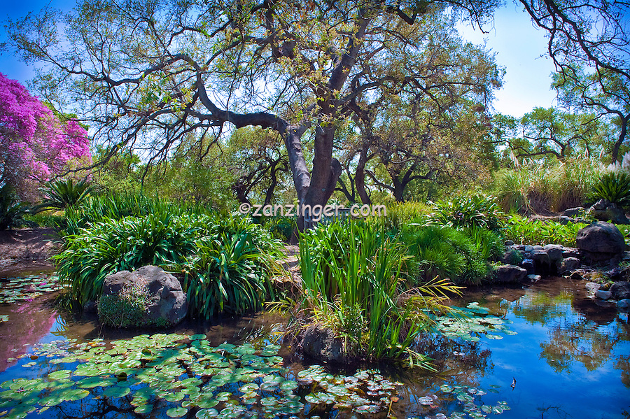 arcadia botanical garden los angeles county arboretum