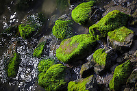 Rocks along the shoreline are covered in green moss while the glistening waters of the bay lap and ripple around them.