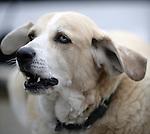 Seattle, WA  Eli boatyard dog