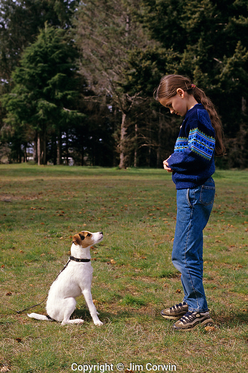 Jack Russell Terrier with young girl in park training a young dog to sit and stay