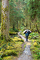WA11262-00...WASHINGTON - Hiker on the Hoh River Trail during a rain storm in Olympic National Park. (MR #S1)