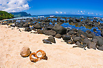 Coconuts on Hideaways Beach, Princeville, Island of Kauai, Hawaii