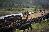 "The Ruby Ranch in Southwestern Montana drive their cattle from their winter pastures to summer pastures in the Centennial Valley. Today, very few ranches drive their cattle with horses, instead moving them by truck. The age of the open range is gone and the era of large cattle drives  over. Historically, cattle drives were a major economic activity in the American west, when millions of cattle were herded from Texas to railheads in Kansas for shipments to stockyards in Chicago and points east. The long distances covered, the need for periodic rests by riders and animals, and the establishment of railheads led to the development of ""cow towns"" across the American West."