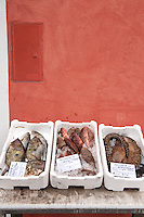 Assortment of fresh seafood for sale at a Pescaria in the port of Ponza, Ponza island, Italy
