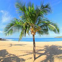 Lone palm tree in the sand at Hulapoe Beach, Lana'i, Hawaii.