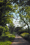 Narrow English country lane,Topcliffe, North Yorkshire, England.