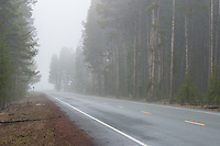 Highway through foggy forest in Yellowstone National Park