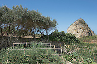 The vegetable garden with a row of olive trees growing against the old stone wall