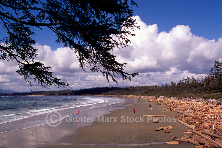 Long Beach at Wickaninnish Bay, in Pacific Rim National Park Reserve, on the West Coast of Vancouver Island, British Columbia, Canada, in Summer