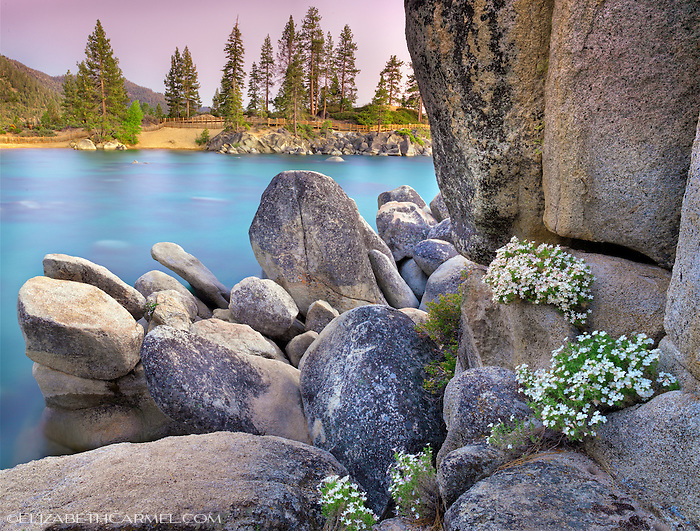 Summer Bloom, Tahoe